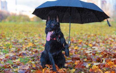 📻 Consejos para mascotas – Lenda en Radio Voz