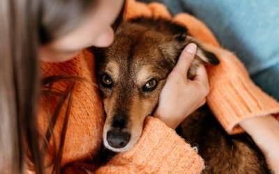 📻 Accesorios para nuestras mascotas – Lenda en Radio Voz
