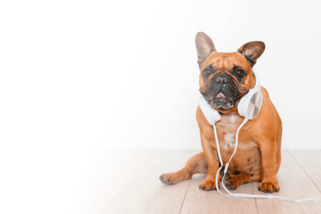 Your pet also loves music!!