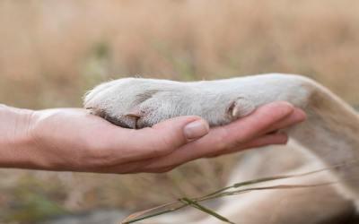 Benefícios de ter animais de estimação para a saúde mental