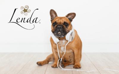 O seu animal de estimação também adora música!