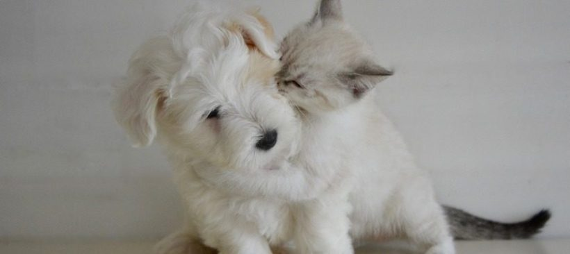 Thinking of Buying a Pet? You May Want to Think Again