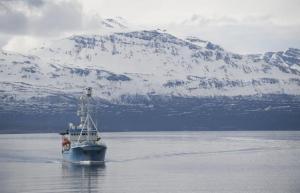 Một tàu nghiên cứu khảo sát ở Vòng Bắc Cực (Saul Loeb/AFP/GettyImages)