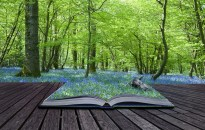 book-and-woods