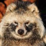 Switzerland part of EU plan to battle invasive species