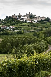Nebbiolo is the star of black grape varieties in Italyís Piedmont region