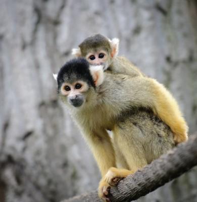 Le News monkeys