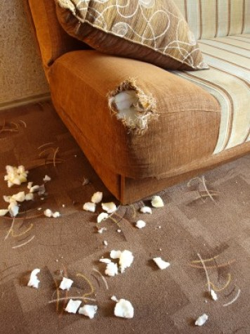 http://www.dreamstime.com/stock-photos-damaged-sofa-2-image17300643