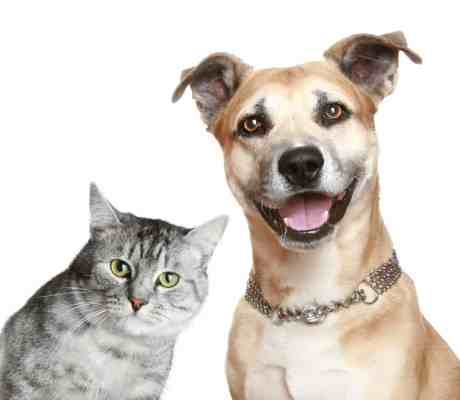 http://www.dreamstime.com/royalty-free-stock-photography-portrait-cat-dog-image14269907