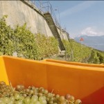 VIDEO: bringing grapes off the steep vineyards of Lavaux by train