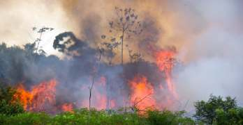 Question of the week: why don't we mourn the loss of rainforests as deeply as that of Notre Dame?