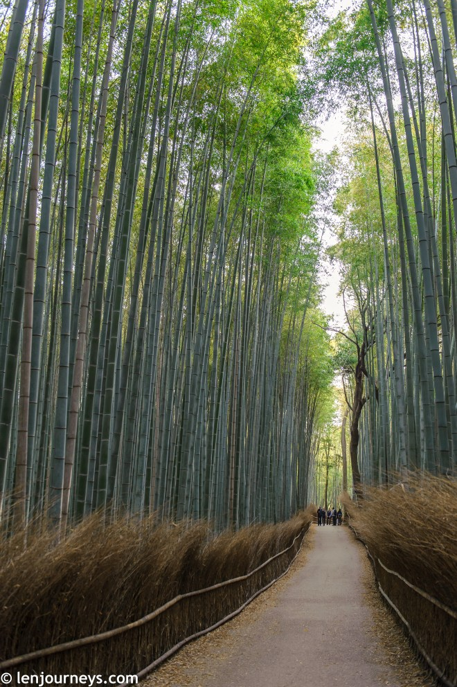 Through the soaring bamboo groves