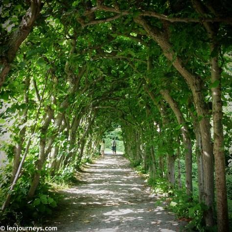 Beautiful tree tunnel