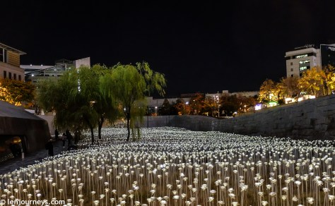 The field of LED roses at DDP