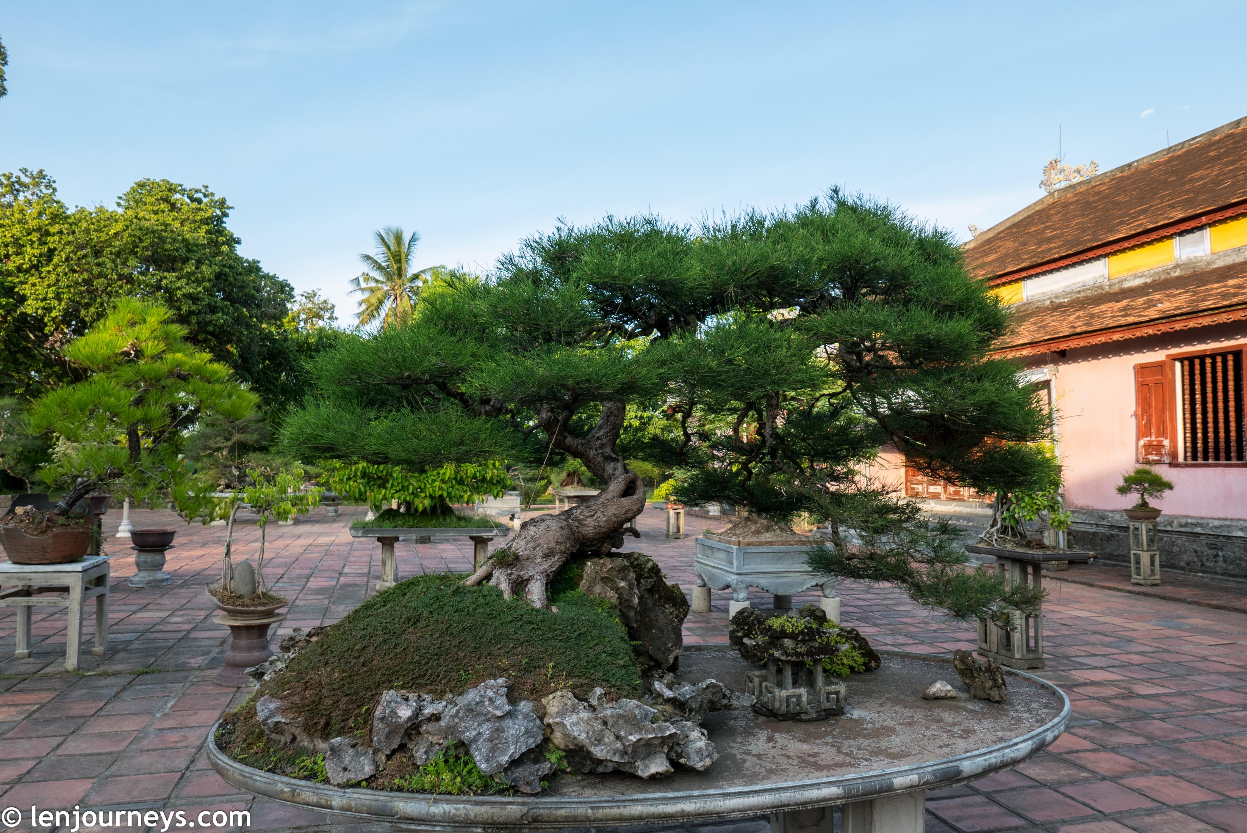 Bonsai at Thien Mu Pagoda