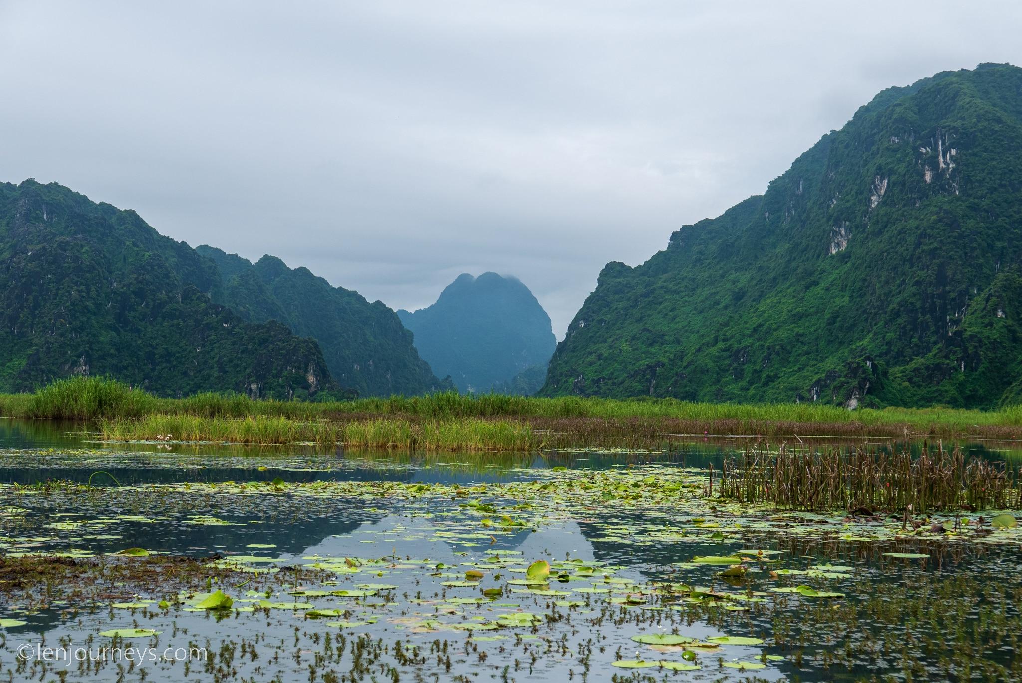 Reedy wetland, Ninh Binh
