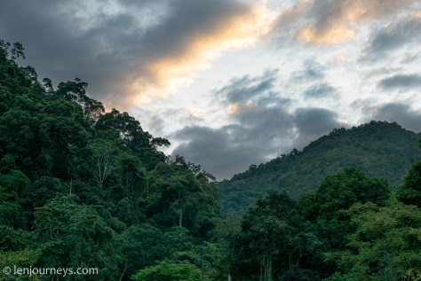 The dense forest of Bac Kan