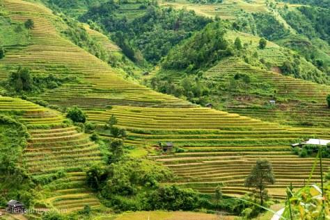 Towering rice terraces in La Pan Tan, Mu Cang Chai