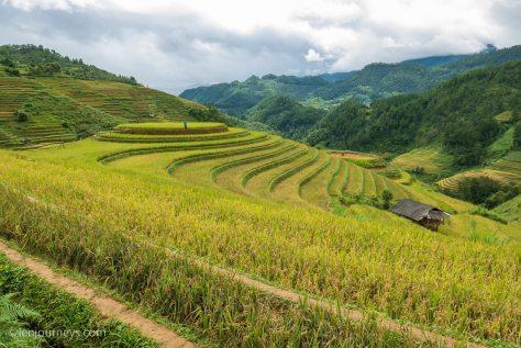 Berry Hill, Mu Cang Chai