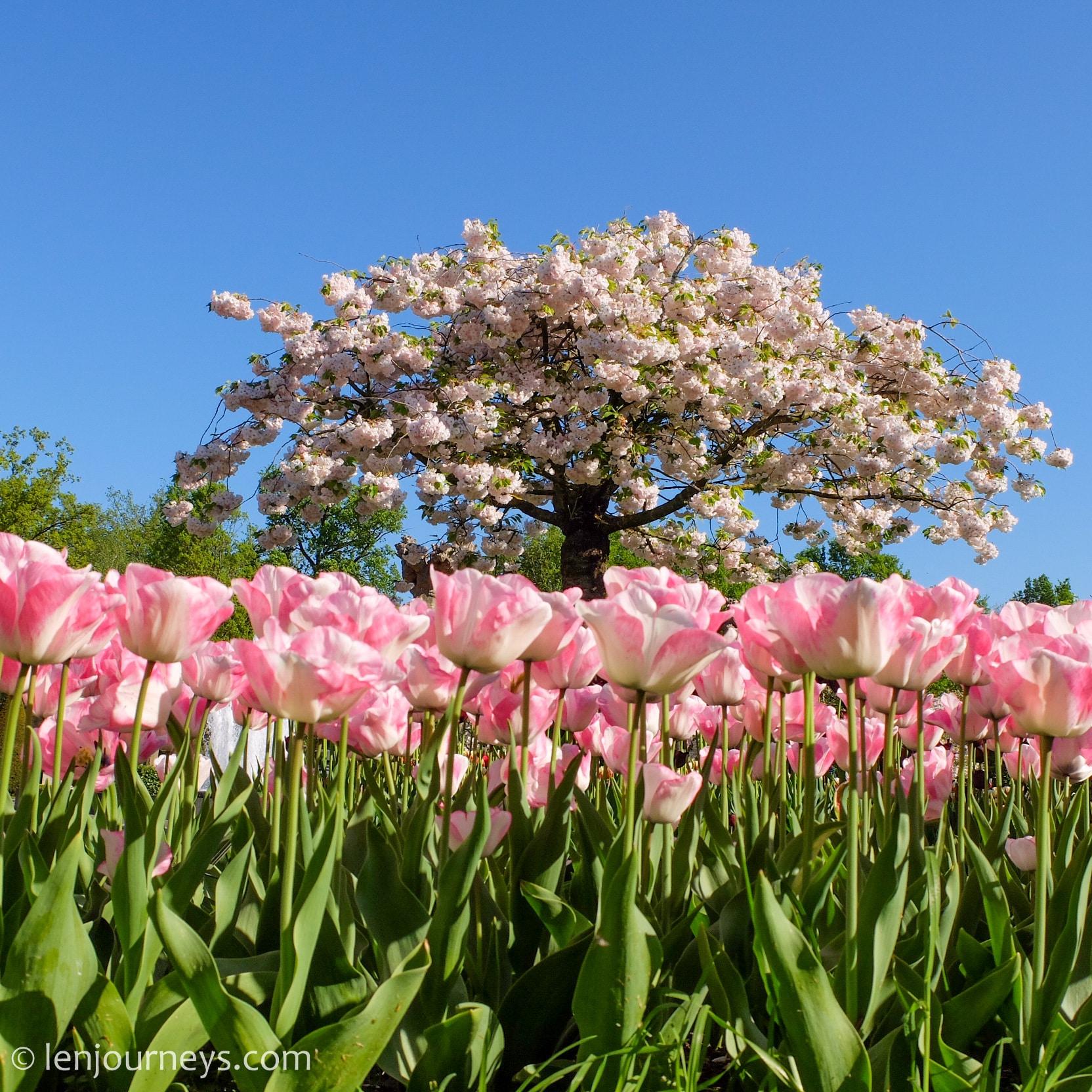 Spring in Keukenhof