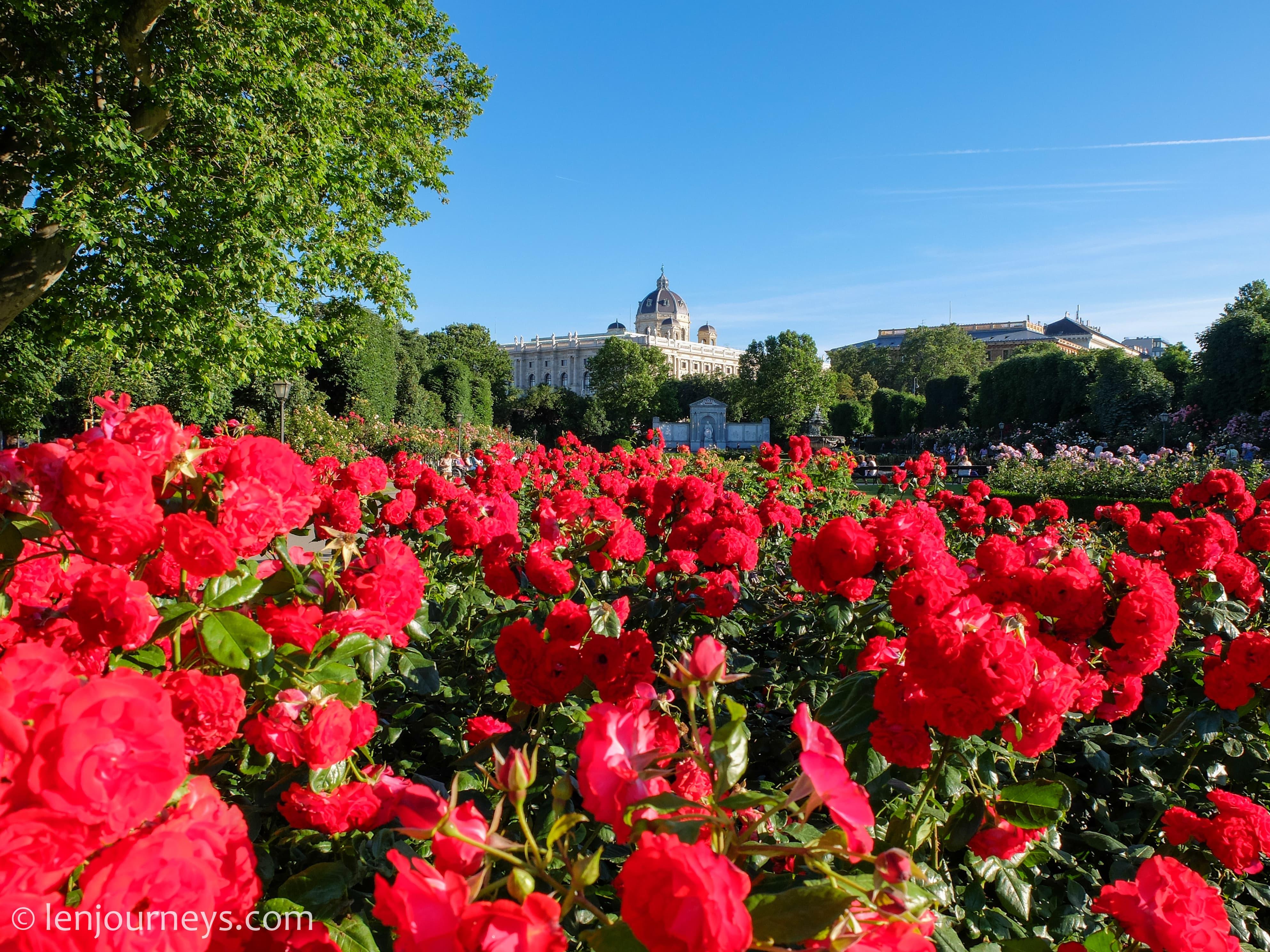 Roses in Volksgarten, Vienna