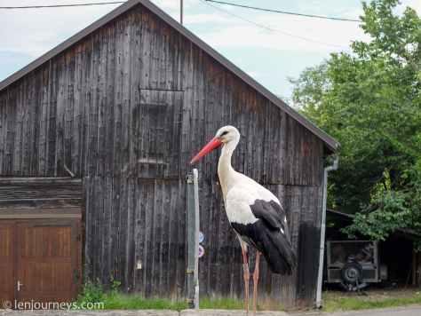 White stork – Alsace's most beloved icon