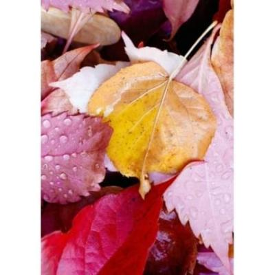 Přáníčko/kondolence Zlatý list v růžových