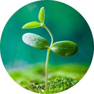 Semínka památečních rostlin