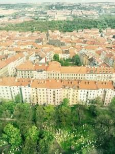 Židovský cintorín, Žižkov, Praha, Česká republika