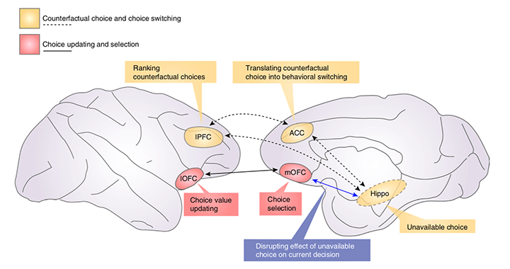 Fouragnan – <em>NatNeuro</em> – The macaque anterior cingulate cortex translates counterfactual choice value into actual behavioral change