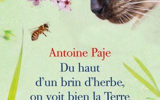 Du haut d'un brin d'herbe on voit la Terre Antoine Paje