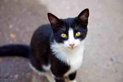 bahia palace kitty / marrakech