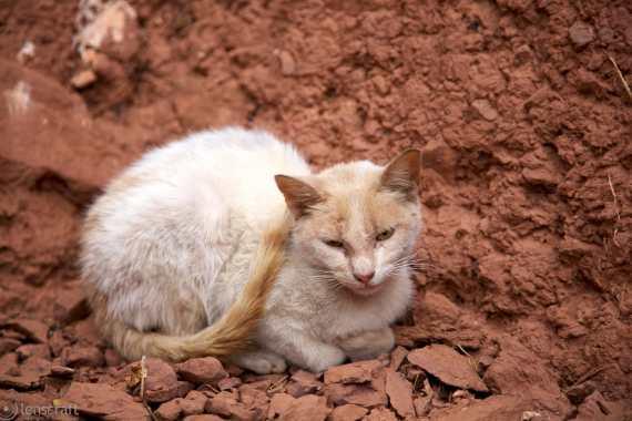 weathered cat / ouirgane, morocco