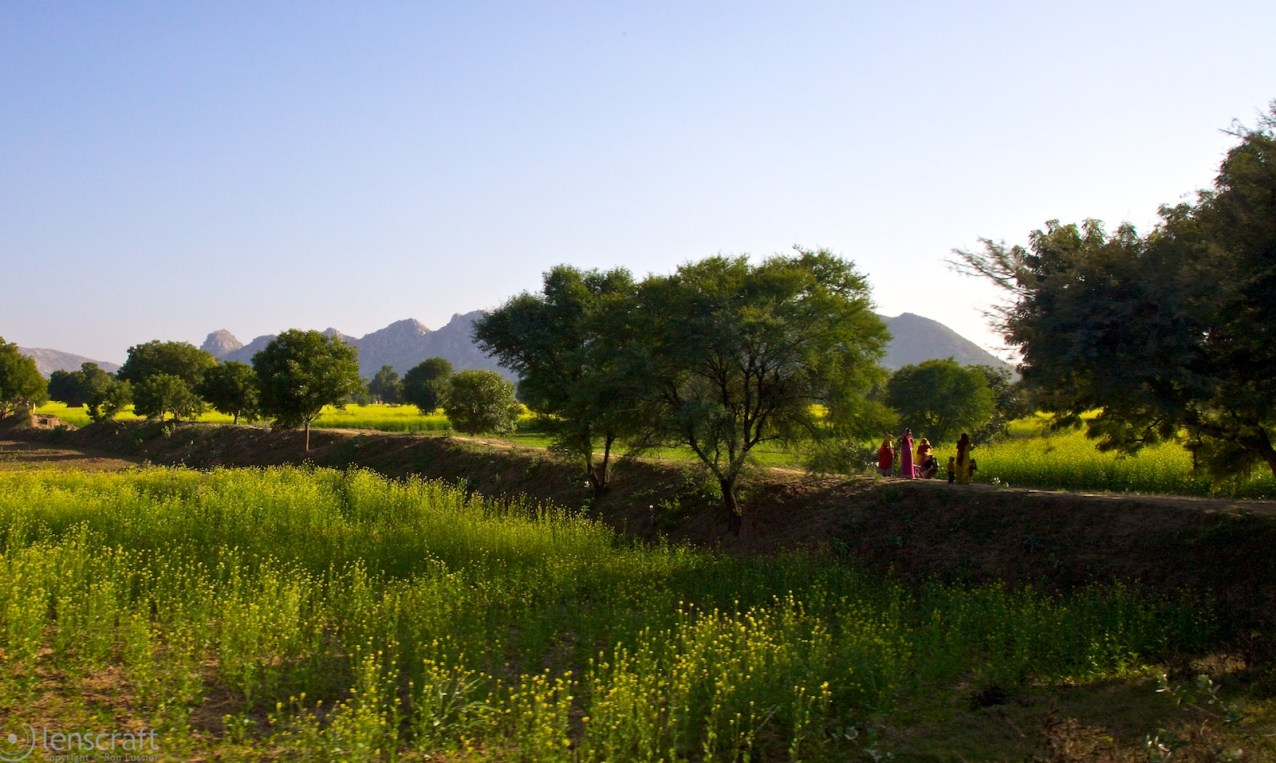 the farm workers / bandkui, india