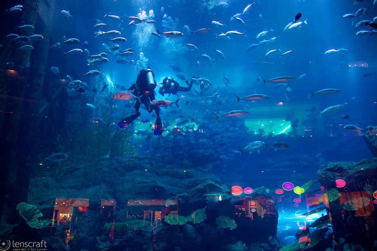 aquarium / dubai mall, uae