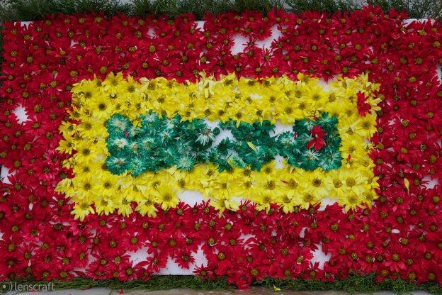 daisies / cartagena, colombia