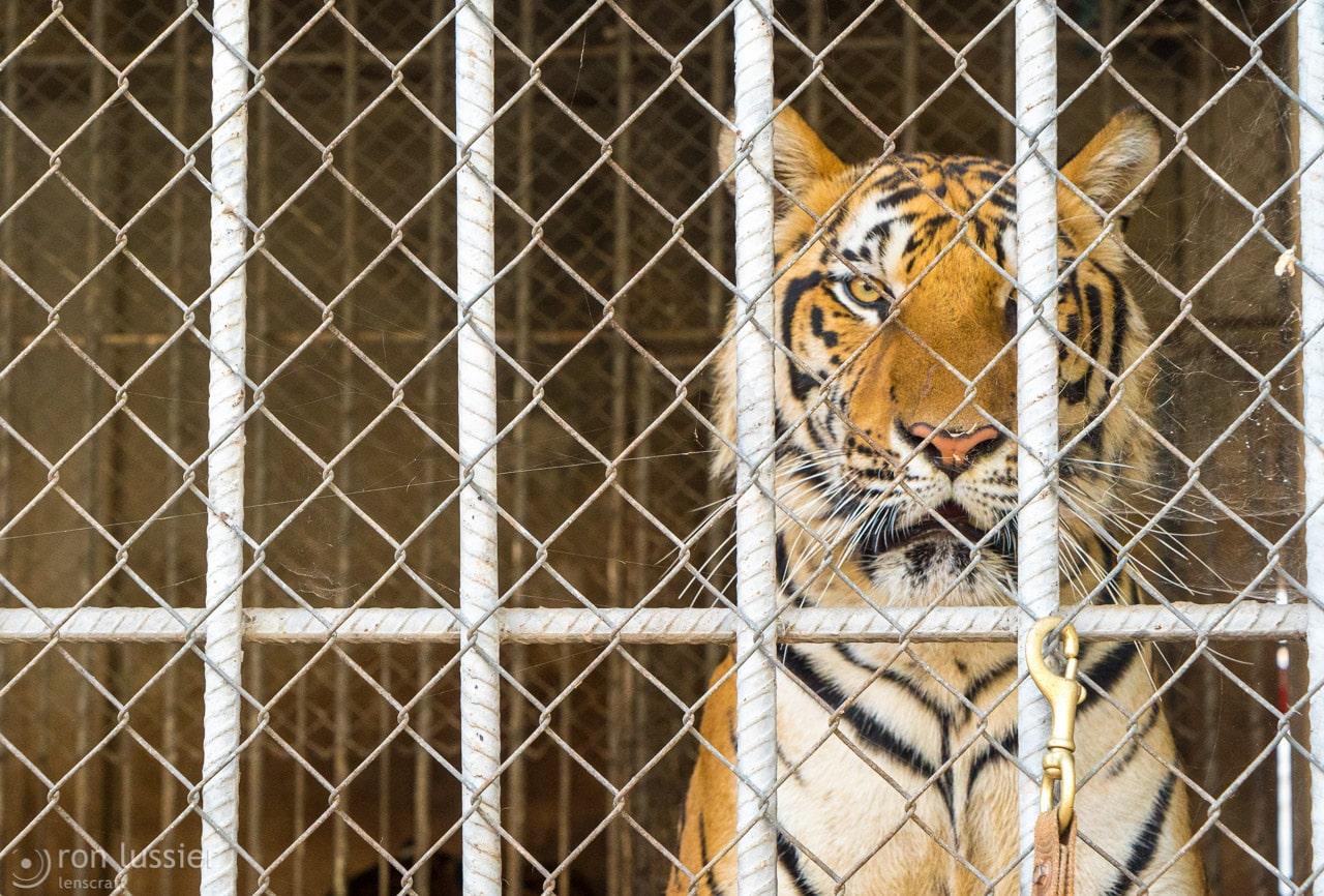 caged / wat pha luang ta bua, kanchanaburi, thailand