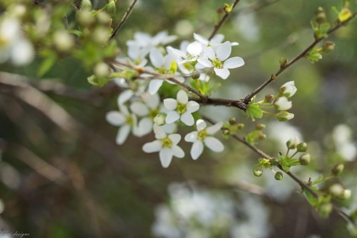 Spring Fling-19