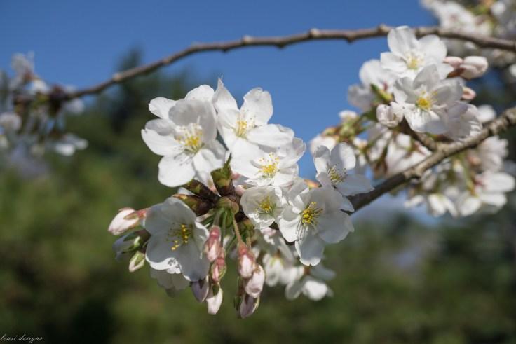 Spring Fling-55