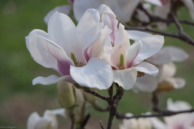Spring Fling-72