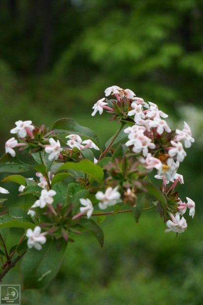 anne-abelia-new-preston-wordpress