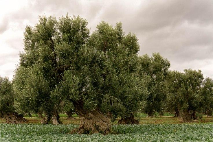 borgo-egnazia-32