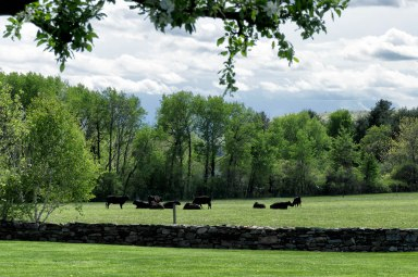 Open pastures surround the property in Sharon, CT