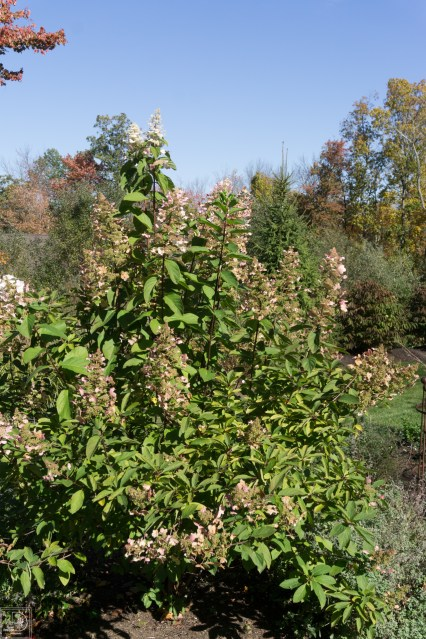 Fall blog-11