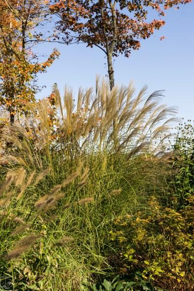 Grasses add in-2