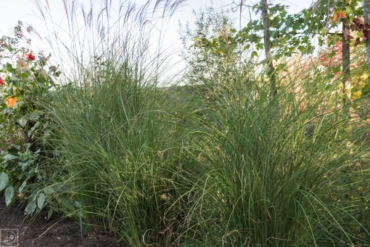 Grasses add in-3
