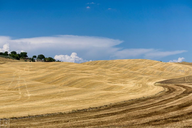Hay Fields-1