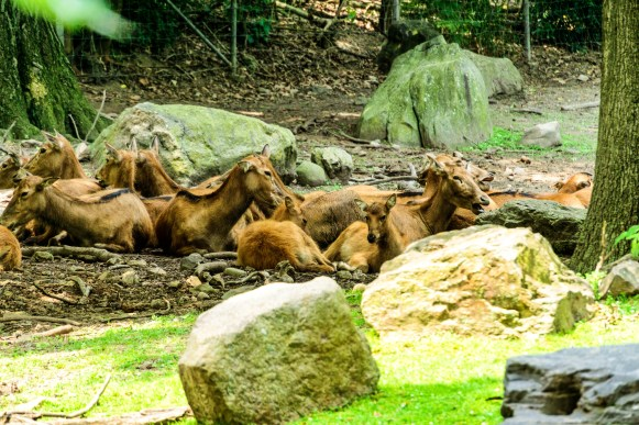 Bronx Zoo-16