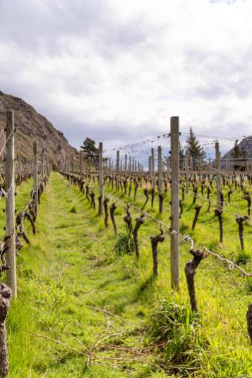 NZ blog Wineries-6