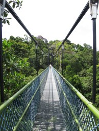 At the Tree top walk in the MacRitchie Reservoir